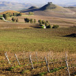 Sicilian vineyard winter landscape — Stock fotografie