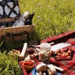 Picnic serie — Stock Photo #26007975