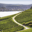 Rheingau Riesling Vineyards — Stockfoto #26042993