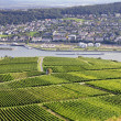Rheingau Riesling Vineyards — Stock Photo