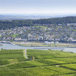 Rheingau Riesling Vineyards — Stock Photo #26045827