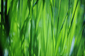 Grass abstract — Stock Photo