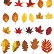 Autumn leaves — Stockfoto #27280447
