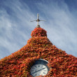 Housetop with red ivy — Lizenzfreies Foto
