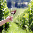 Red wine swiveling in a glass, vineyard in the background — Foto de Stock