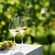 Two glasses of white wine (Risling) in vineyard — Stock Photo