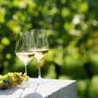 Two glasses of white wine (Risling) in vineyard — Stock Photo #27324363