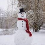 Snowman — Stock Photo #29165935