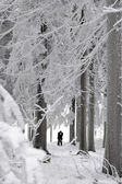 Silhouettes of a kissing couple in a winter landscape — Stock Photo