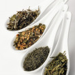 Different sorts of green tea — Foto Stock