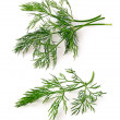 Dill stems isolated on white background — Stock Photo