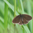 Stock Photo: Big brown butterfly resting on grass