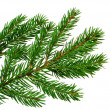 Fresh green fir branch isolated on white background — Stockfoto
