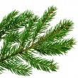 Fresh green fir branch isolated on white background — Stock Photo