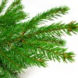 Stok fotoğraf: Fresh green fir branches isolated on white background