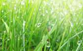 Green lawn with water dew on grass — Stock Photo