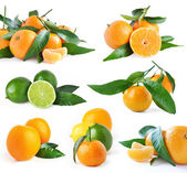 Set of oranges and lime isolated on white background — Stock Photo