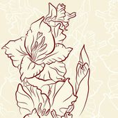 Gladiolus — Stock Vector