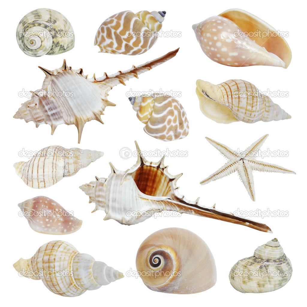 手绘图素描矢量图 chuhail  海贝壳集合.