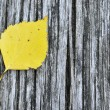 Stock Photo: Yellow birch leaf