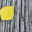Yellow birch leaf — Stock Photo