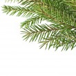 Fir tree branches — Stock Photo #31397145