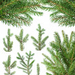 Fir tree branches — Stock Photo
