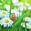 Orange butterfly sitting on flower — Stock Photo #35004661
