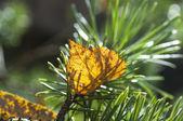 Jesień zostawić — Zdjęcie stockowe
