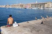 不寻常的鸥科鸟在位于法国中部的马赛旧港 — 图库照片