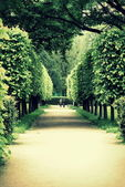 Alley curly trees at Peterhof on the shore of the Gulf of Finland — Stock Photo