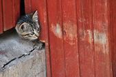 Tabby kattunge medan du spelar i en sommardag — Stockfoto