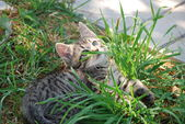 Little striped kitten playing in the grass — Stockfoto