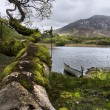 Stock Photo: Ireland landscape