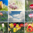 Springtime — Stock Photo