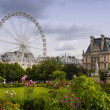 Jardin de Tuileries in Paris city — Stock Photo