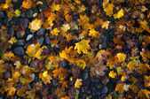 Tapete de folhas no outono — Foto Stock