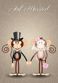 A couple of monkeys just married — Stock Photo