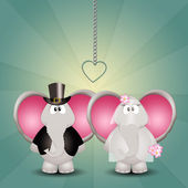 A couple of elephants spouses — Stock Photo