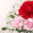 Red and pink Carnation Bouquet. (horizontal) - Stock Photo