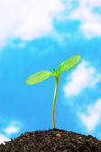 Sunflower sprout on blue sky background.(vertical) — Stockfoto