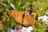 黄色の蝶 — ストック写真