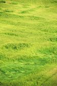 Grass waves — Stock Photo