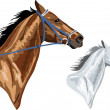 Two horse heads - Stock Vector