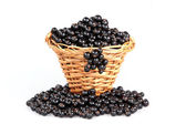 Blueberries in wooden basket — Stok fotoğraf