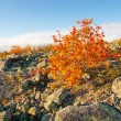 Stock Photo: Lapland highlands in autumn