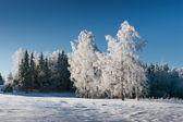 Frostig morgon — Stockfoto