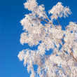 Stock Photo: Frosted tree