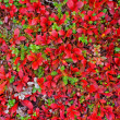 Stock Photo: Red carpet of plants in Lapland