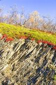Geological layer of Norwegian mountain — Stock Photo
